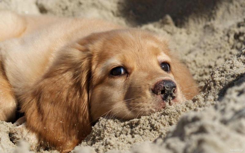 Βόλος: Παραδειγματική τιμωρία σε 56χρονη ιδιοκτήτρια σκύλων