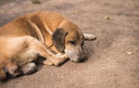 Οι υιοθεσίες αδέσποτων ζώων στον Δήμο Νάουσας γίνονται πλέον ηλεκτρονικά!