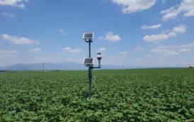 Η «ευφυής γεωργία» υποστηρίζει την καλλιέργεια ροδάκινου!