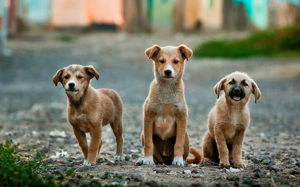 Η ηλεκτρονική σελίδα υιοθεσίας αδέσποτων ζώων του Δήμου Βέροιας!