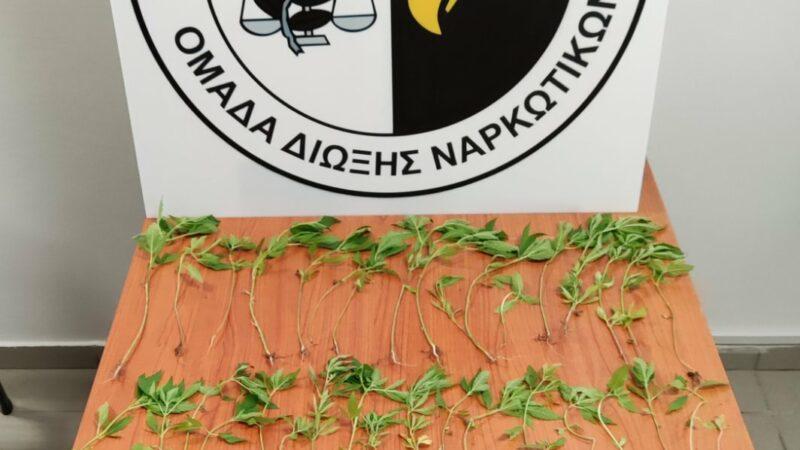 Κιλκίς: Καλλιεργούσε στην αυλή του 65 φυτά κάνναβης